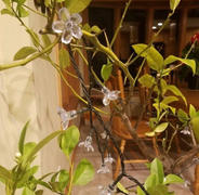 Next Deal Shop Solar-Powered Warm-White Blossom Flower String Lights Review