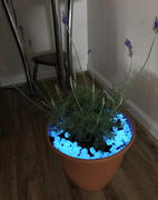 Next Deal Shop Glow-in-the-Dark Garden Pebbles Review