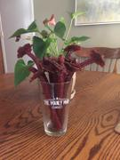 The Manly Man Company® Beef Jerky Flower Bouquet Review