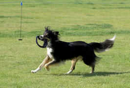 Tug-E-Nuff Dog Gear Sheepskin Bungee Ring Review