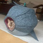 The Cat Ball Great White Shark Cat Ball Cat Bed Review