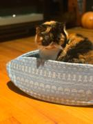 The Cat Ball Watermelon Cat Canoe - a pet bed that looks like fruit Review