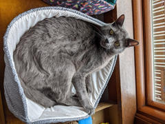 The Cat Ball Cat Canoe - Neutral Grey Ivory Swirl Review