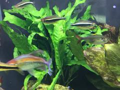 Your Fish Stuff Java Fern Thor's Hammer Review