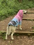 Shirtwascash Summerwave Dog Hoodie Review