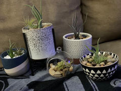 Holistic Habitat  Small Mid Mod Stoneware Planter & Stand Review