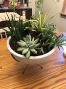 Holistic Habitat  Weathered White Clay Bowl Planter on Copper Stand Review
