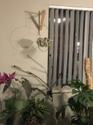 Holistic Habitat  Minimalist Plant Hanger Medium Gold Review