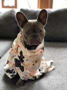 French Bulldog Love The Classic Black - French Bulldog Pet Fleece Blanket - Small Review