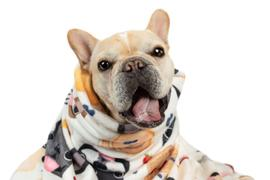 French Bulldog Love PRE-ORDER // Brunch Time French Bulldog Fleece Blanket - Large Review