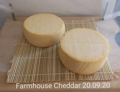 New England Cheesemaking Supply Company Cheese Coloring Review