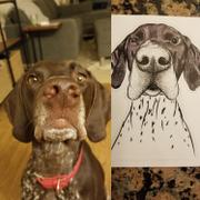 Inkopious Booze the German Shorthaired Pointer - Decal Sticker Review