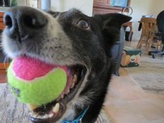Woof N' Wag KONG AirDog Squeaker Birthday Balls 3 Pack Review