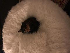 KloudSac Deluxe White Faux Fur Bean Bag (Regular) Review