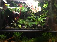 Aqua Lab Aquaria Biopod Smart Microhabitat Review