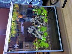 Aqua Lab Aquaria UNS 25C Ultra Clear Rimless Aquarium (4 GAL) - Ultum Nature Systems Review