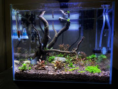 Aqua Lab Aquaria In-Vitro Plant Starter Kit for High Tech Planted Aquariums - ALA Review