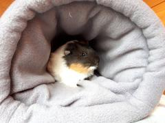 The Hoghouse Fleece cosy bunker. Hedgehog and guinea pig padded fleece lined house. Review