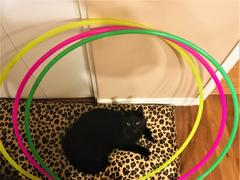 The Spinsterz Single Color 4 Section Collapsible Polypro Hoop Review