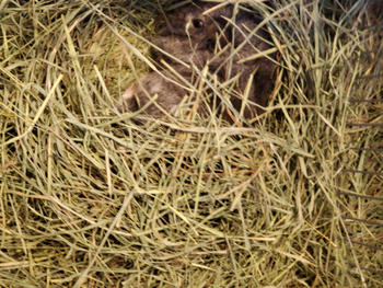 KMS Hayloft Bluegrass hay Review