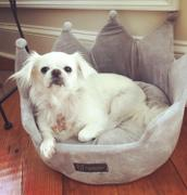 Nandog Pet Gear LIGHT GRAY CROWN DOG AND CAT BED Review