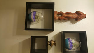 tableclothsfactory.com 3 Pack | Egg Shaped Glass Wall Vase | Indoor Wall Mounted Planters | Hanging Terrariums Review