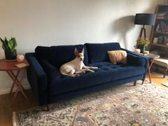 Poly & Bark Napa Velvet Sofa Review
