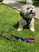 Beast & Buckle Outer Space Harness & Leash Set Review