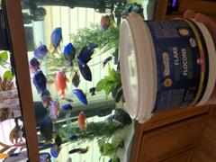 Super Cichlids Northfin Kelp Flakes Review