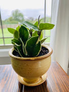 Pistils Nursery Hand Thrown Ceramic Planter - Mellow Yellow Review