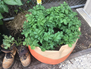 Aussie Gardener Potato Planter Bags - The easy way to grow potatoes at home Review