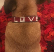 Love Is Project Bundle - Best Friend Pet Collar & Bracelet Review