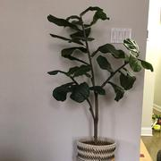 RusticReach Artificial Tree Fiddle Leaf Fig Tree Review