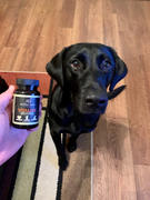 Alpha Dog Nutrition Vitality Omega 3 for Dogs Review