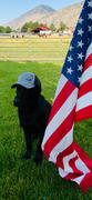 Alpha Dog Nutrition Lab Cap Review