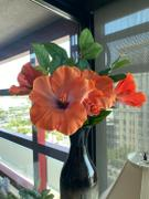 Afloral.com Silk Flowers Hibiscus Spray in Orange Coral - 26 Tall Review
