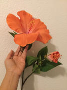 Afloral.com Silk Flowers Hibiscus Spray in Orange Coral - 26.5 Tall Review