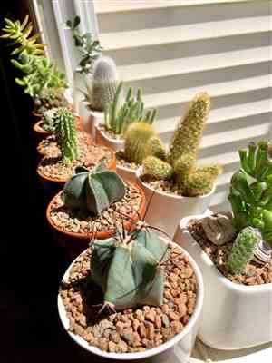 Andres C. verified customer review of Echinocereus ingens