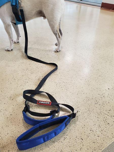 Nicholas . verified customer review of Pioneer Leash