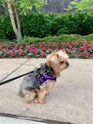 Dominika K. verified customer review of Escape Free® Easy Fit Harness