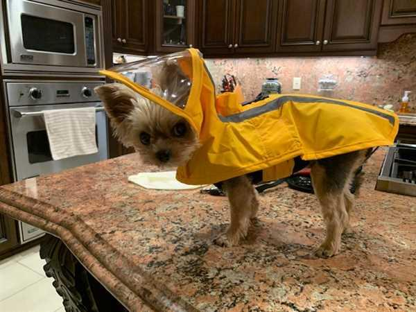 Nancy Valla verified customer review of Rain Coat - Yellow / Medium