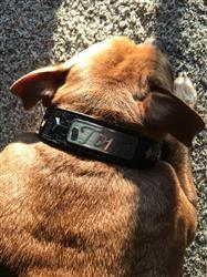 Dawne F. verified customer review of V27 - 1 1/2 Name Plate Diamond Collar