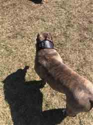John M. verified customer review of 3 Wide Leather Dog Collar