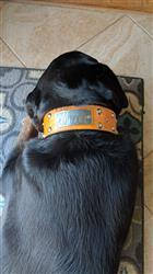 Jaosn R. verified customer review of TW12 - 2 Name Plate Tapered Dog Collar w/Studs