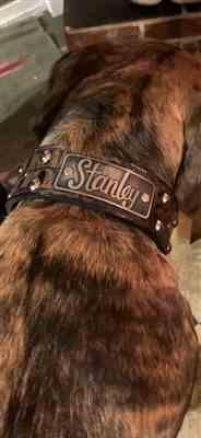 Pit Bull Gear N12 - 2 Name Plate Studded Leather Dog Collar Review