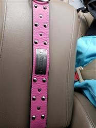 Teresa F. verified customer review of N12 - 2 Name Plate Studded Leather Dog Collar