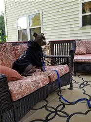 Sheilah R. verified customer review of BEST DOG EVER - ZIPPER DOG HOODIE