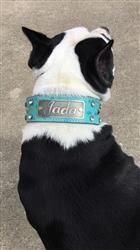 Makayla B. verified customer review of WN3 - 2 Name Plate Studs & Gems Leather Dog Collar