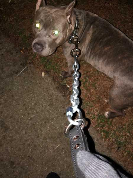 Pit Bull Gear Heavy Chain Lead w/Loop Leather Handle - 30 Review
