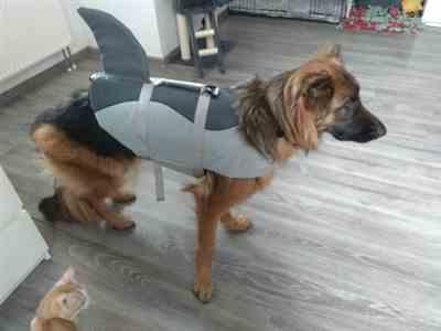 Pavacat Shark Life Vest For Dogs Review